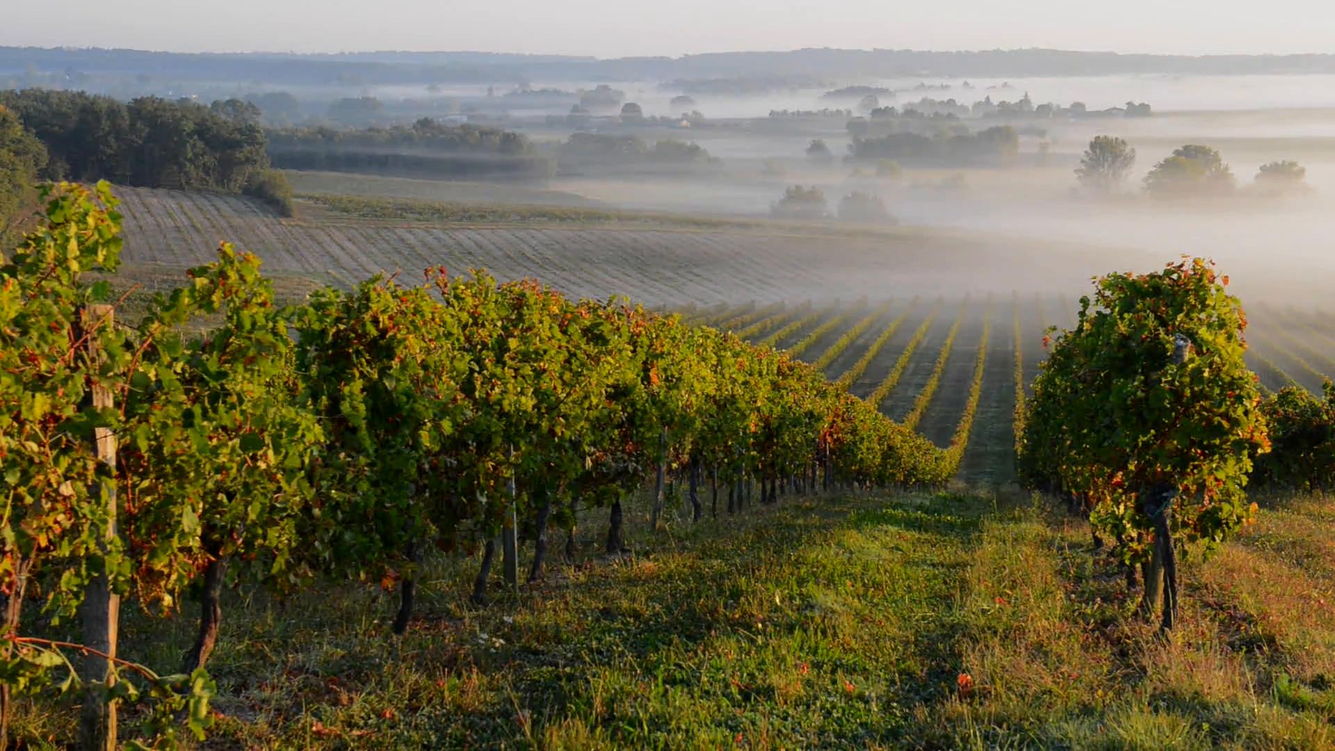 landscape-bordeaux-vineyard-in-autumn_x1zzisbt__F0000.png