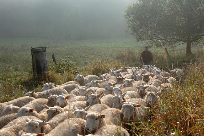 flock.jpg