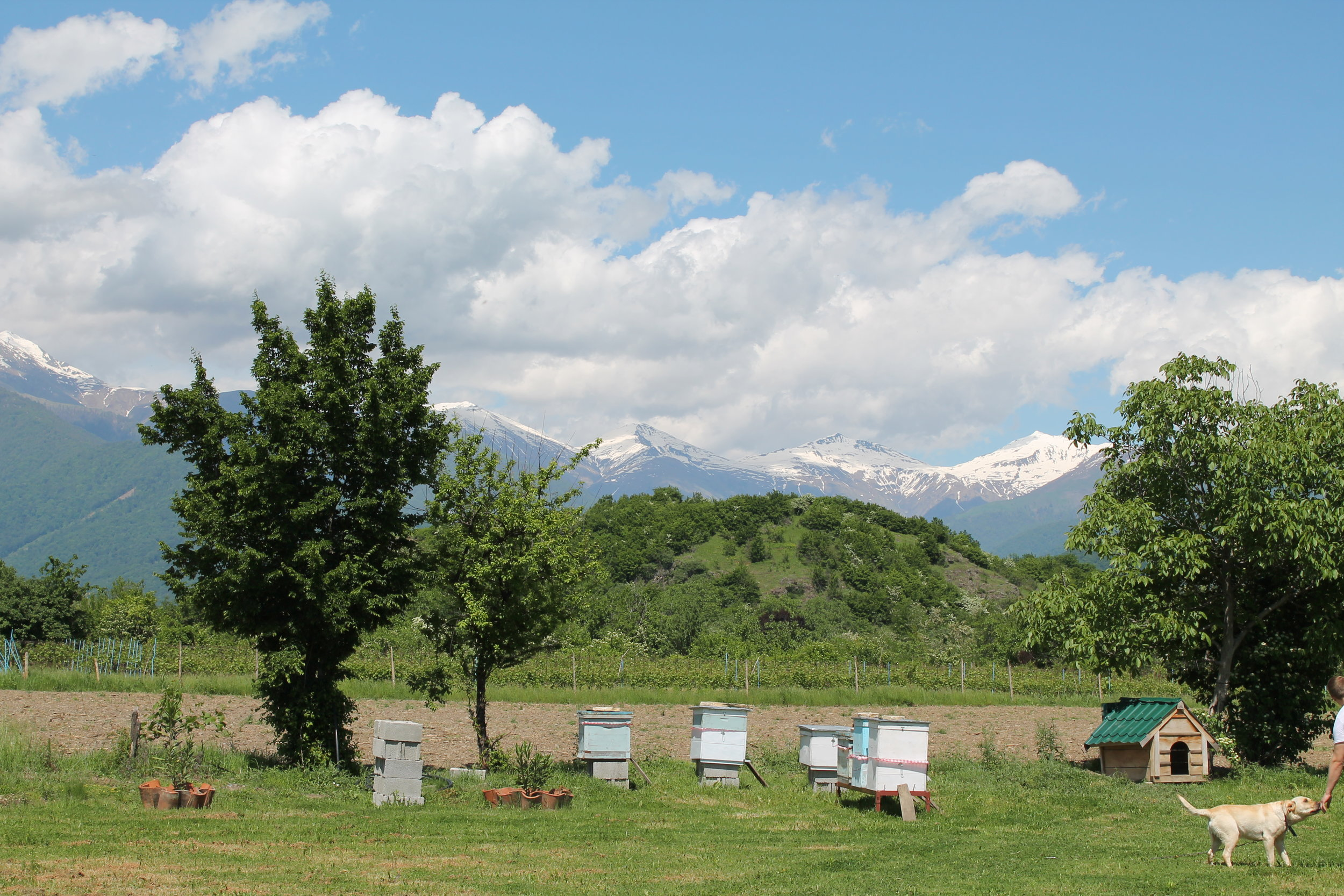 Chubini Wine Cellar under the Caucasus Mountains.