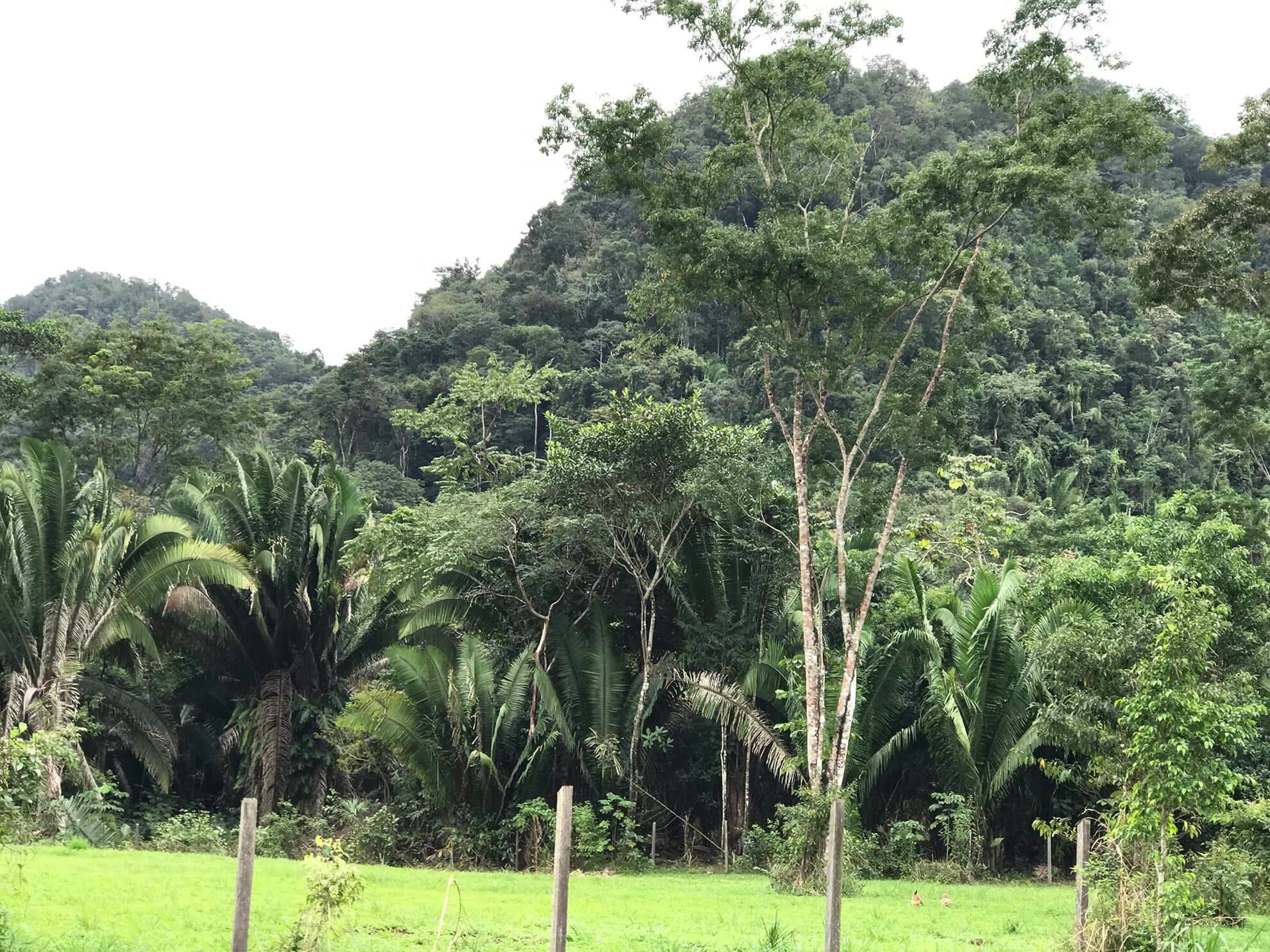 Toledo District Forest