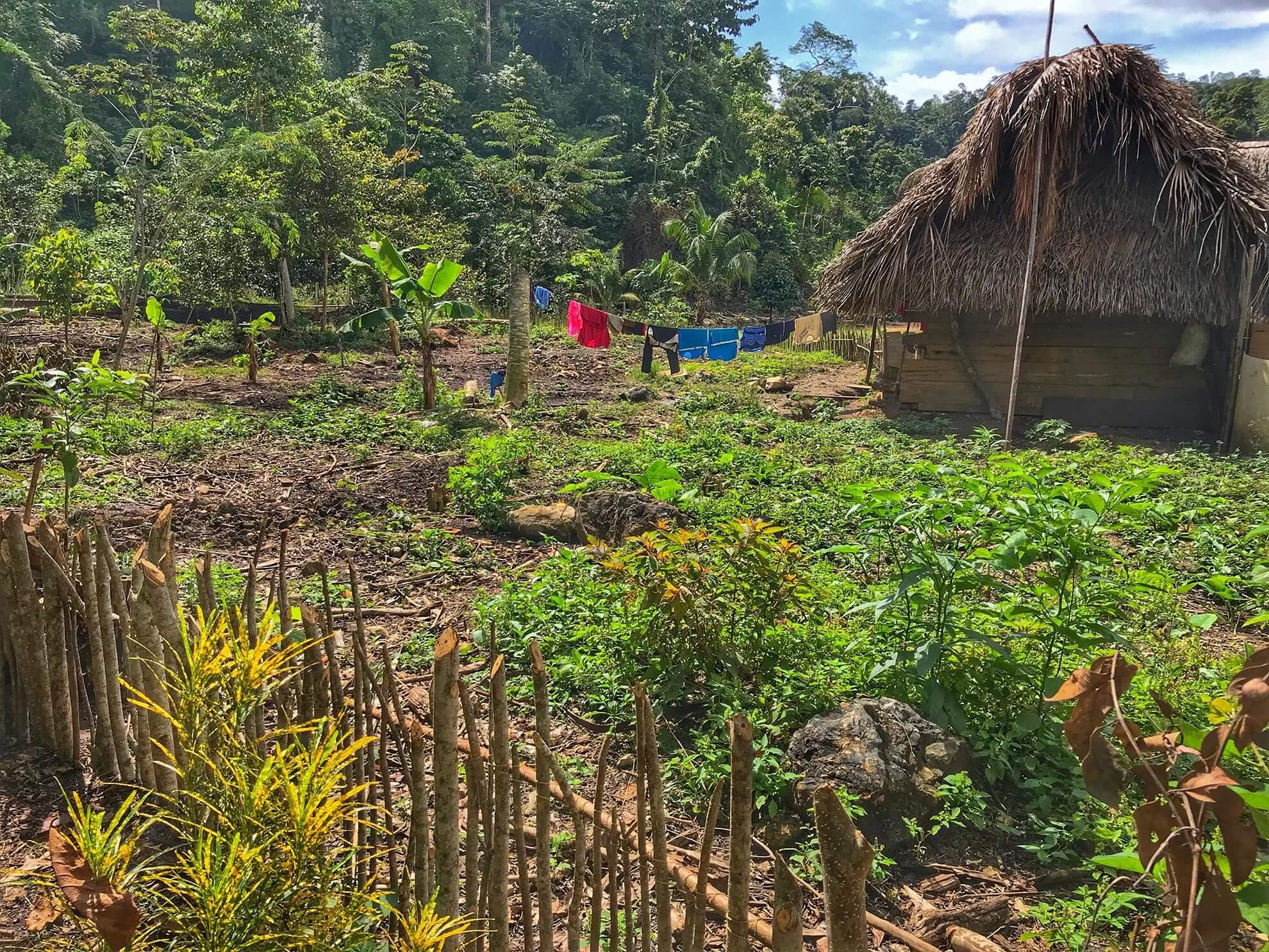 Belize Farm