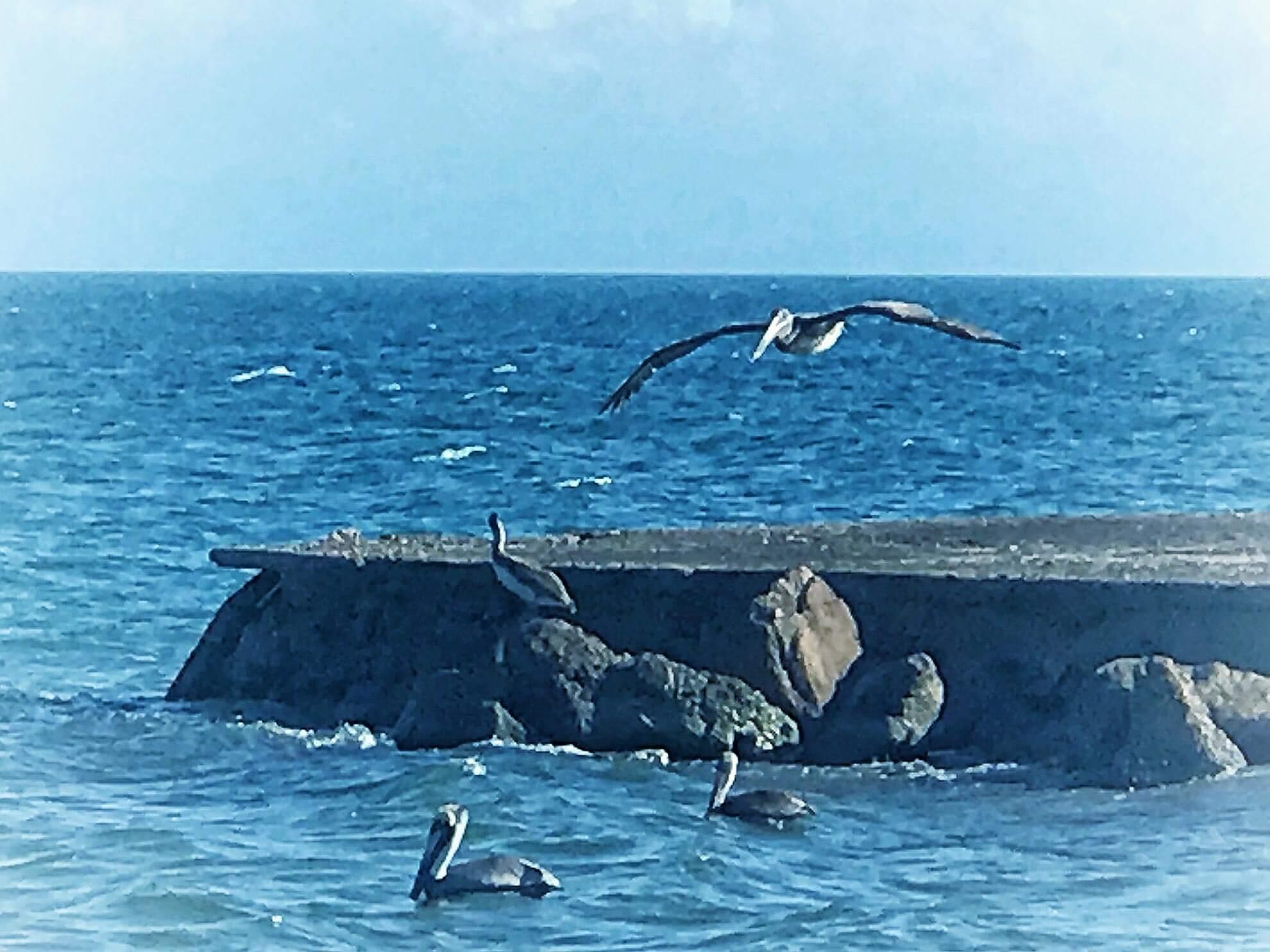 Seagulls off the Coast