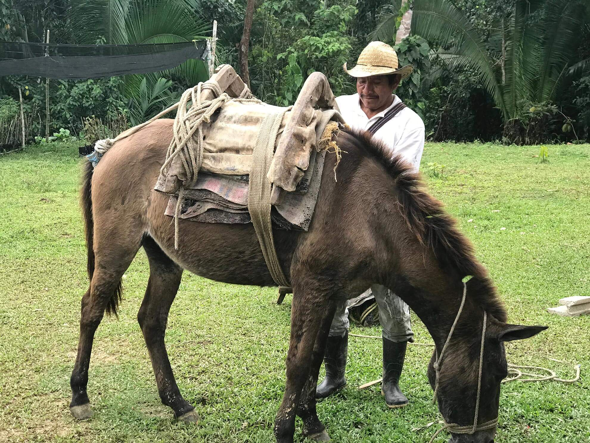 Belizean Man 2.jpg