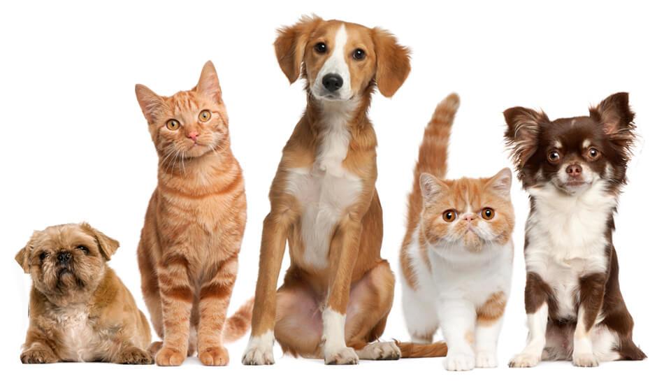 Turmeric Pets.jpg