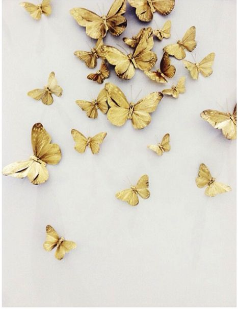 Butterfly Back_MKTG_NATL.jpg