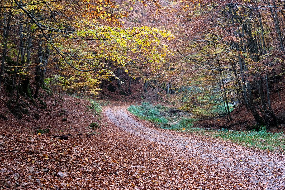 10 - 20 Valea Boiului-095-Edit copy.jpg