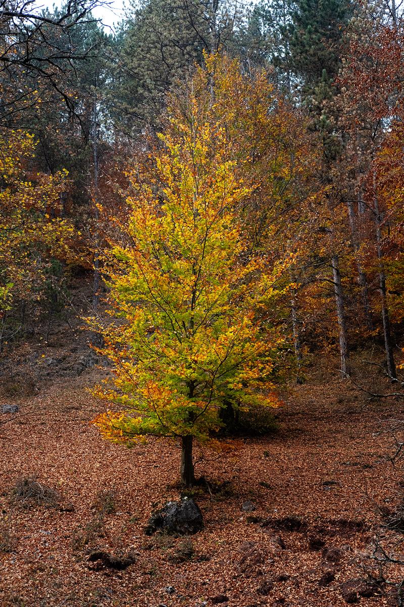 10 - 20 Valea Boiului-153-Edit copy.jpg