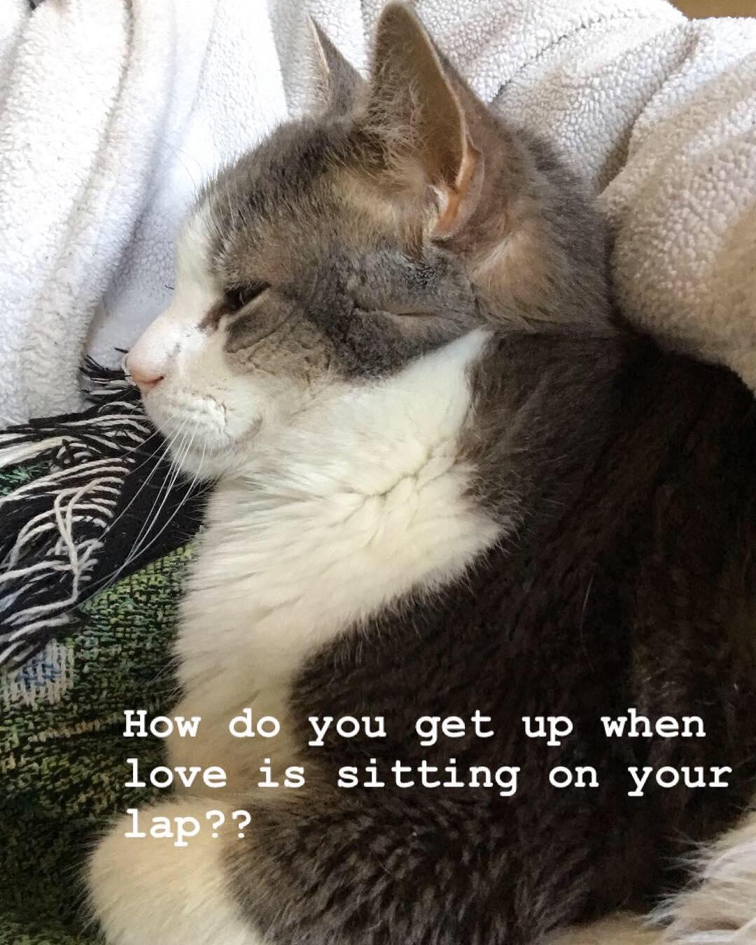 Meditation companion