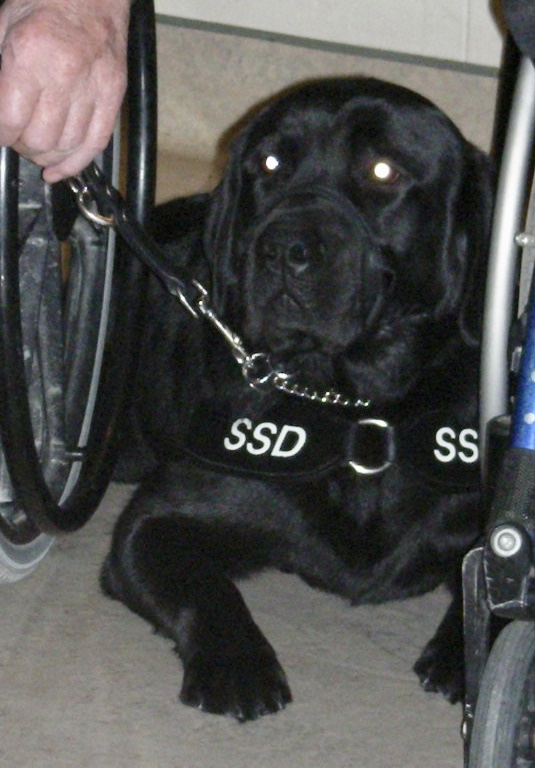 Mig - Special Skills Guide Dog