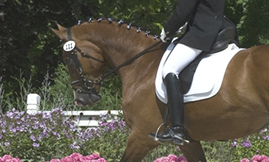 kcds-dressage-flowers.jpg