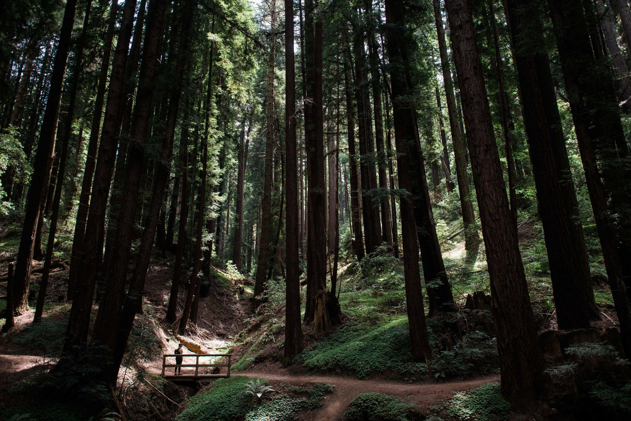 redwoods-6949.jpg
