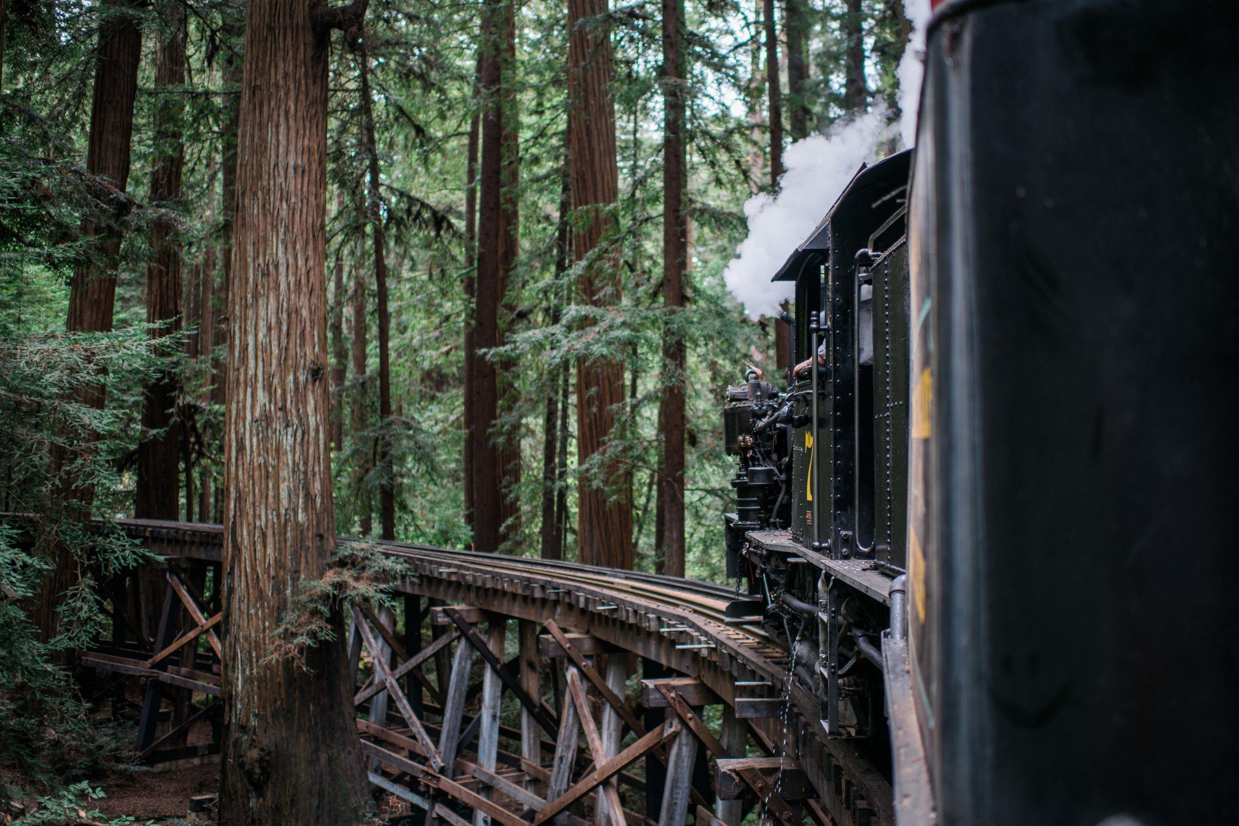 henry cowell redwoods-0055.jpg
