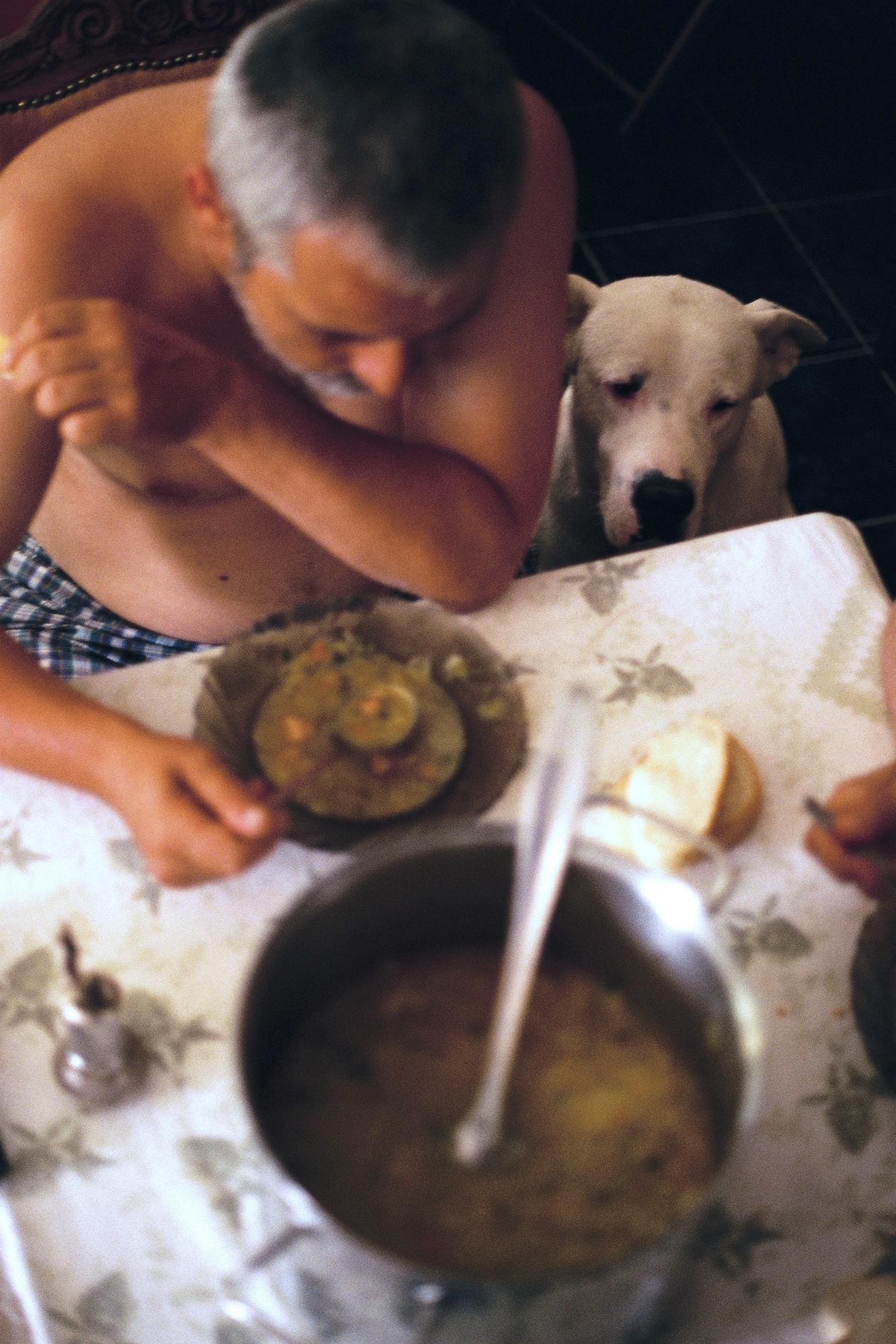 Marija Vidovic, Dogs - 1.jpg