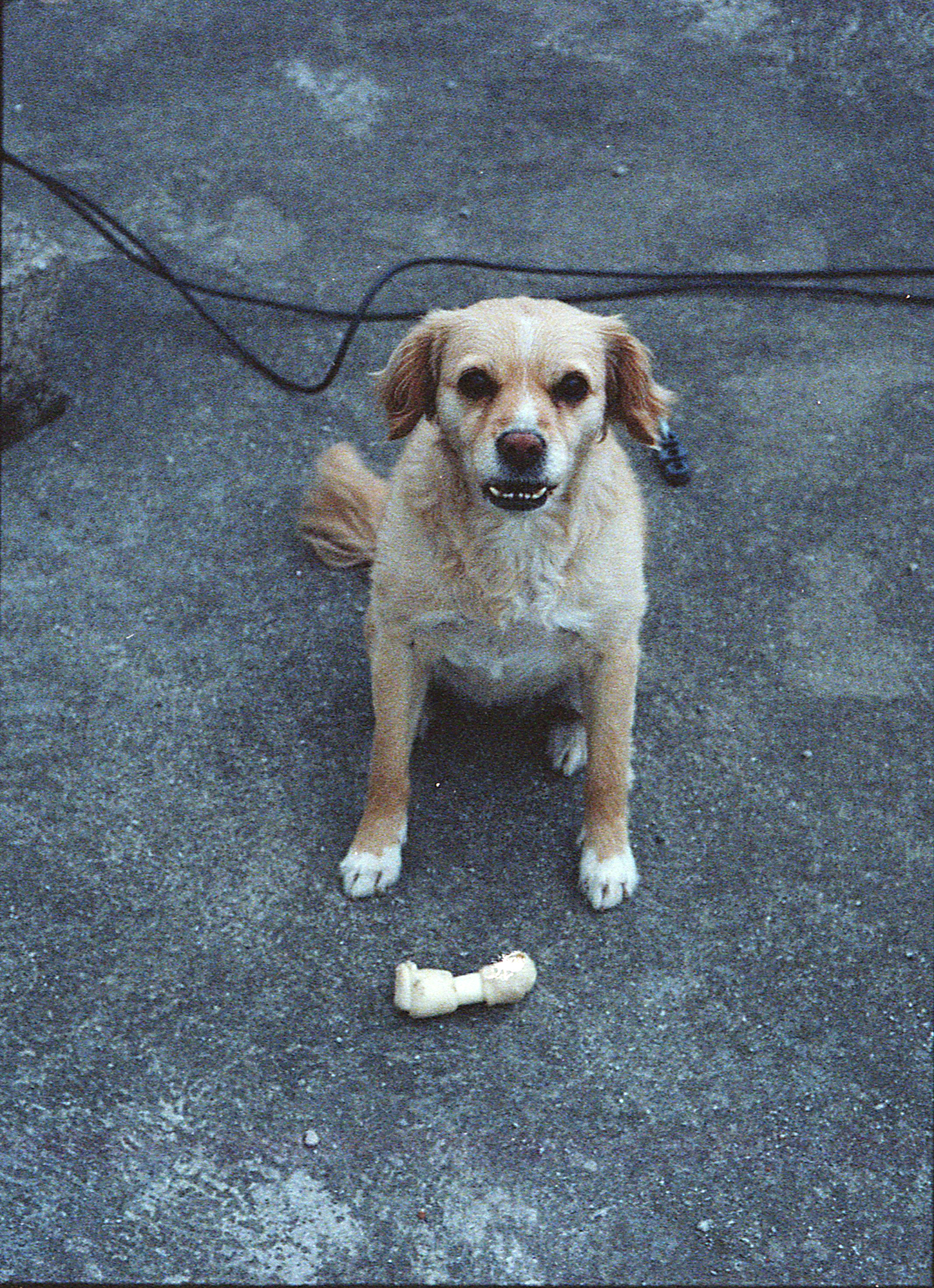 Marija Vidovic, Dogs - 3.jpg
