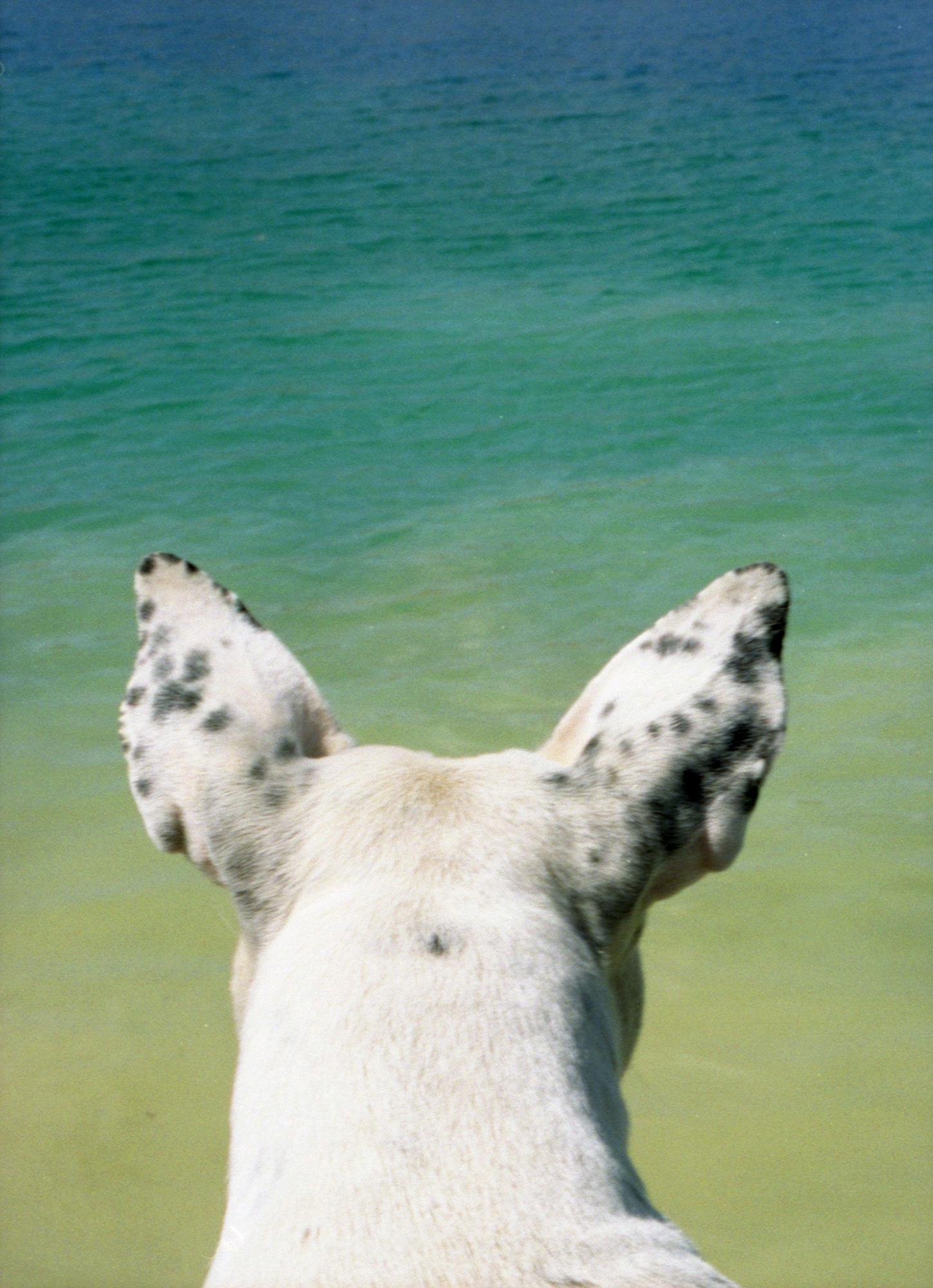 Marija Vidovic, Dogs - 6.jpg