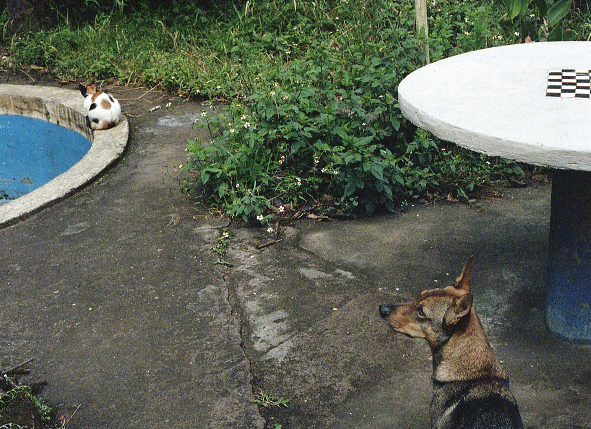Marija Vidovic, Dogs - 9.jpg
