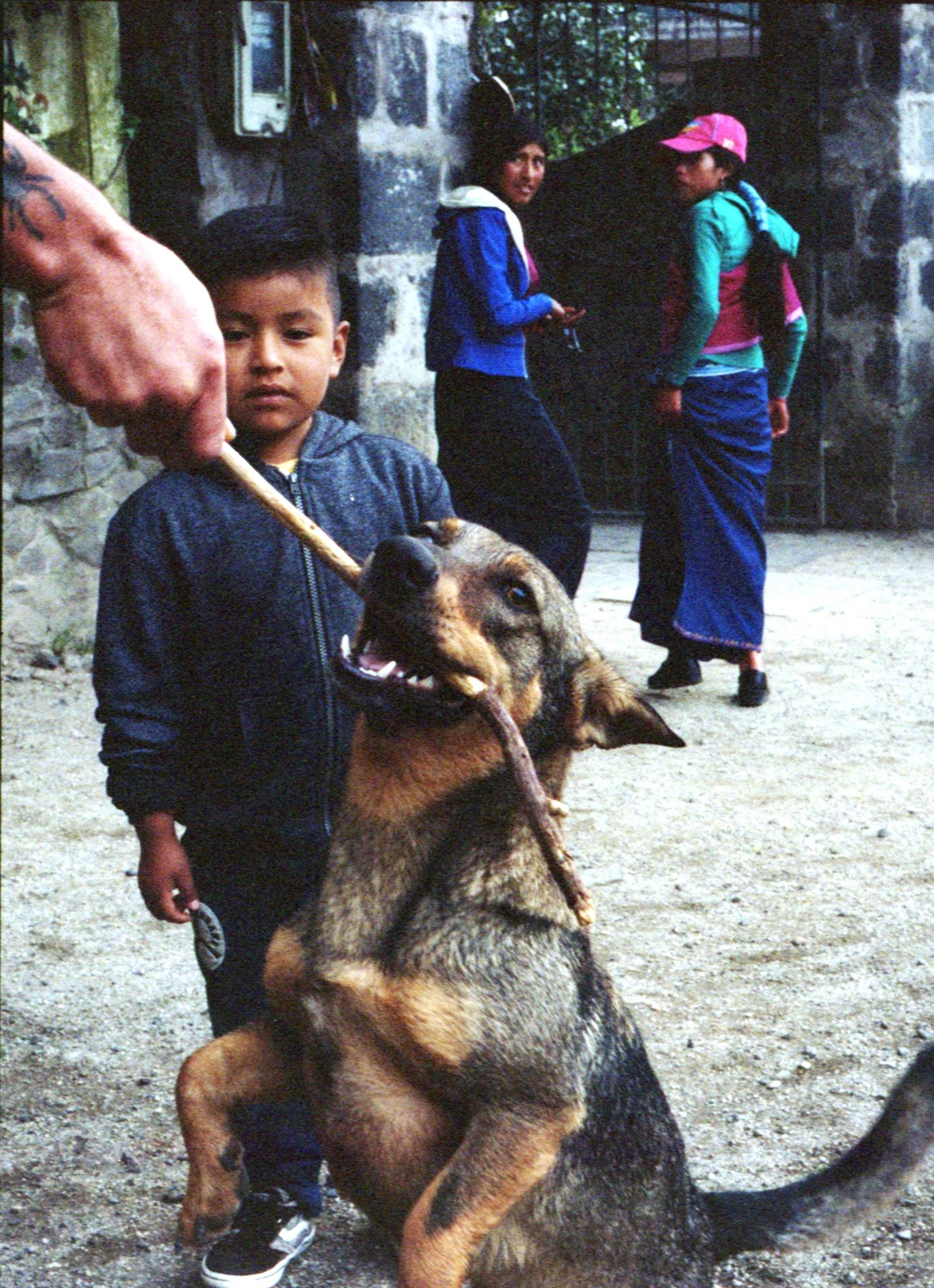 Marija Vidovic, Dogs - 10.jpg