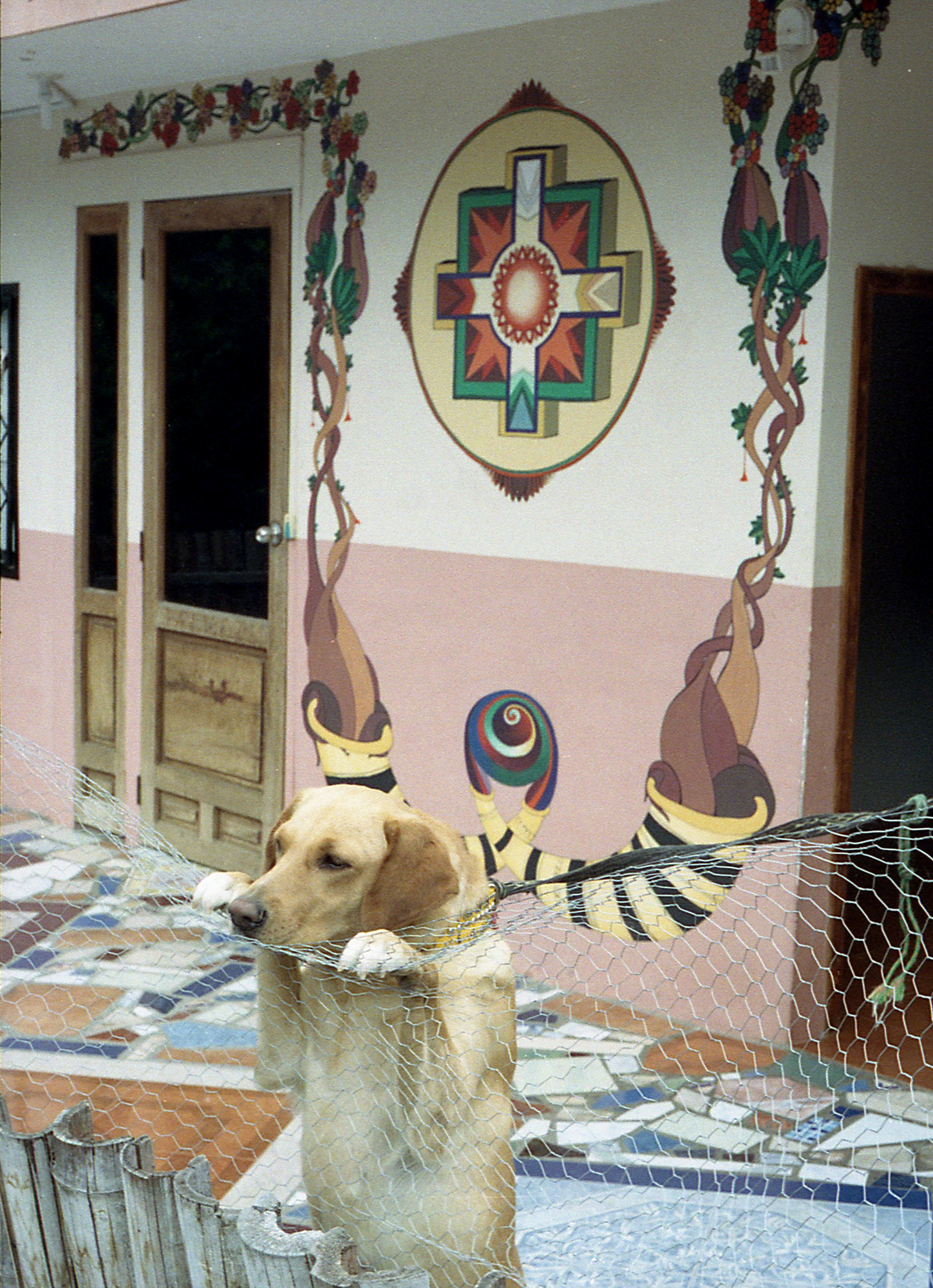 Marija Vidovic, Dogs - 12.jpg