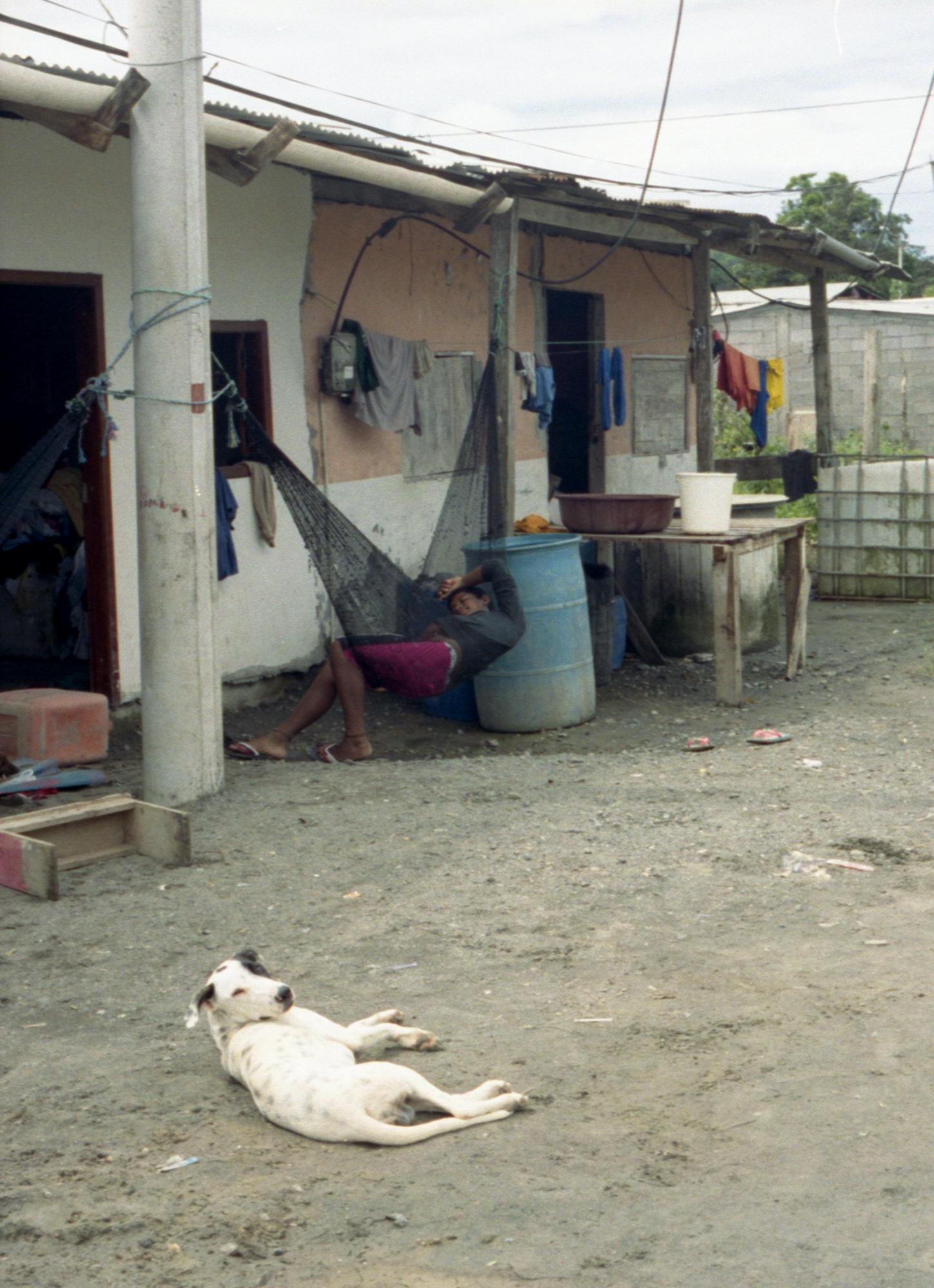 Marija Vidovic, Dogs - 17.jpg