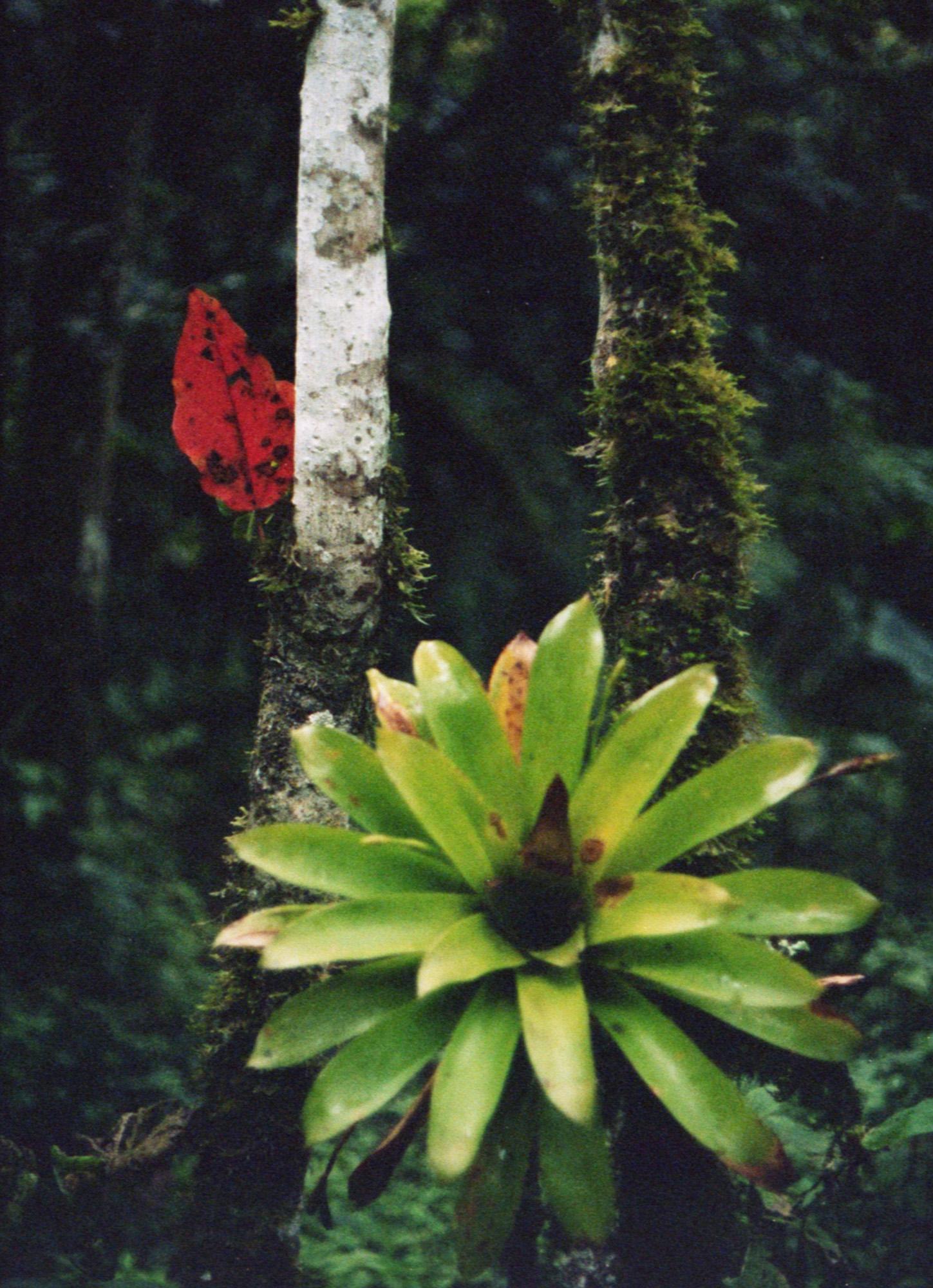 Marija Vidovic, Plants 2.jpg