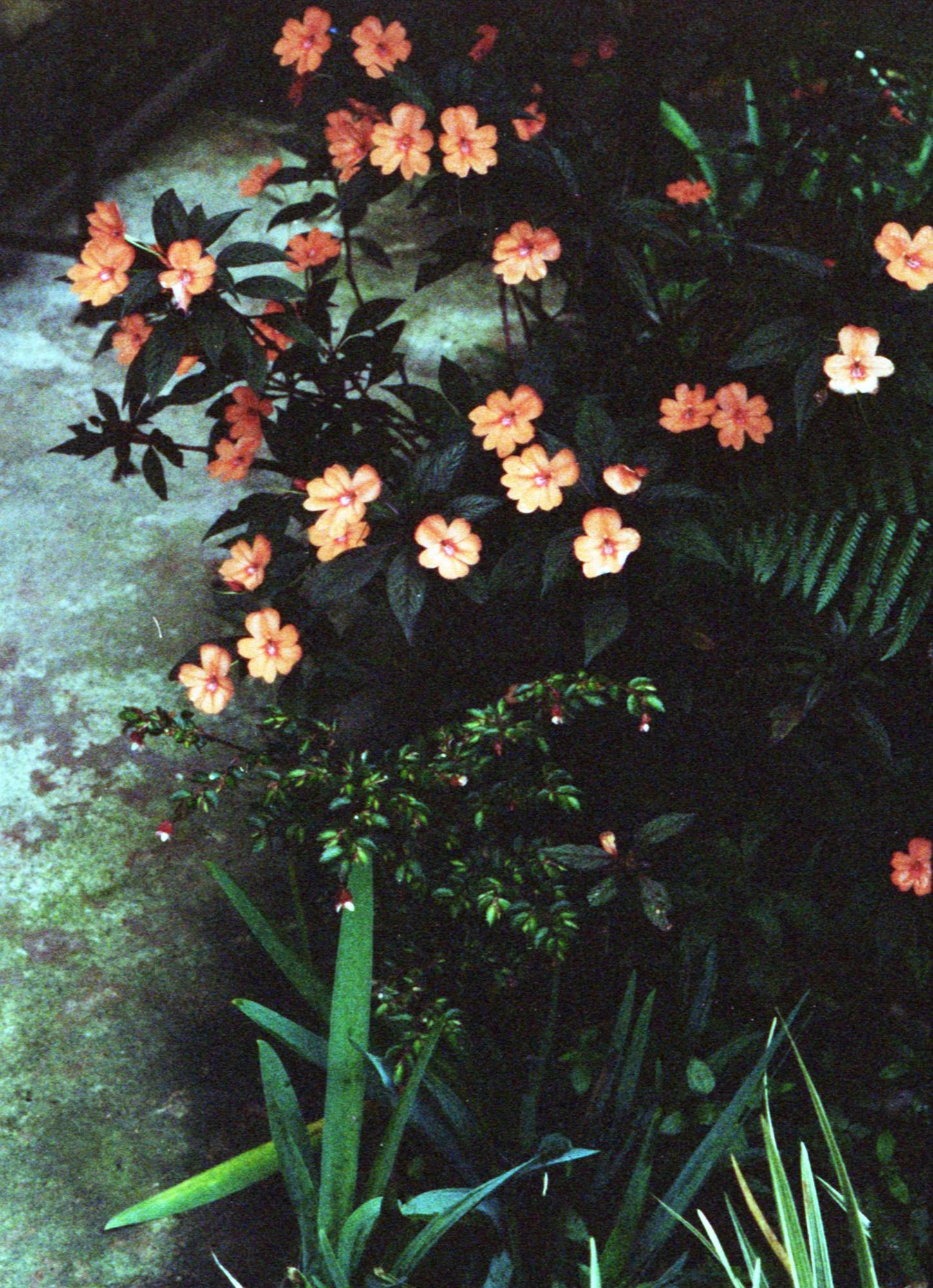 Marija Vidovic, Plants 3.jpg