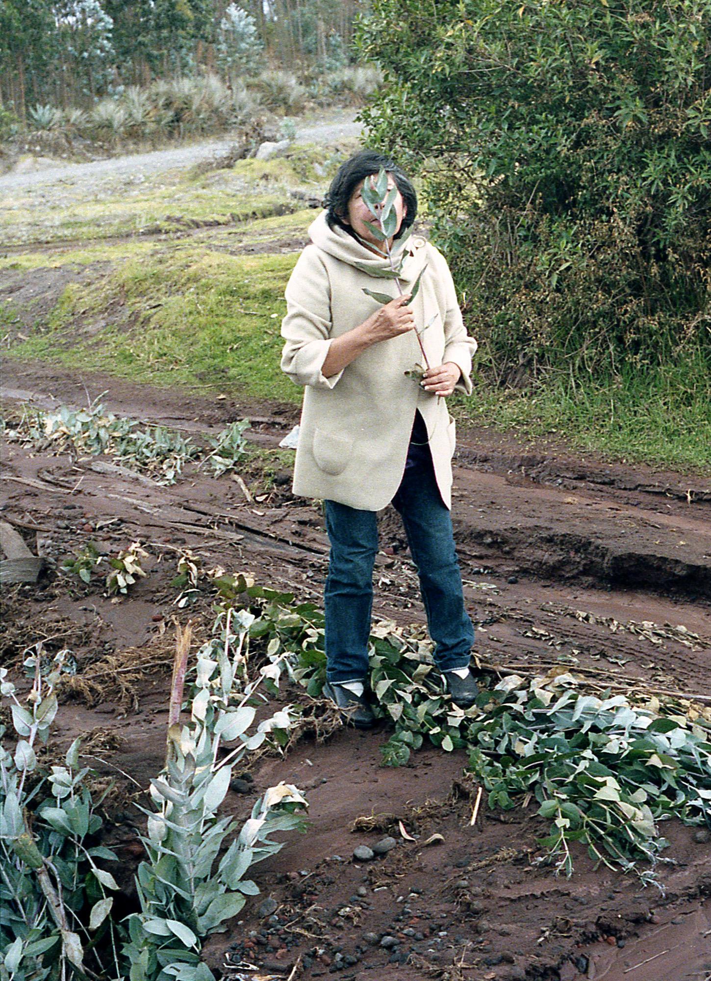 Marija Vidovic, Plants 11.jpg