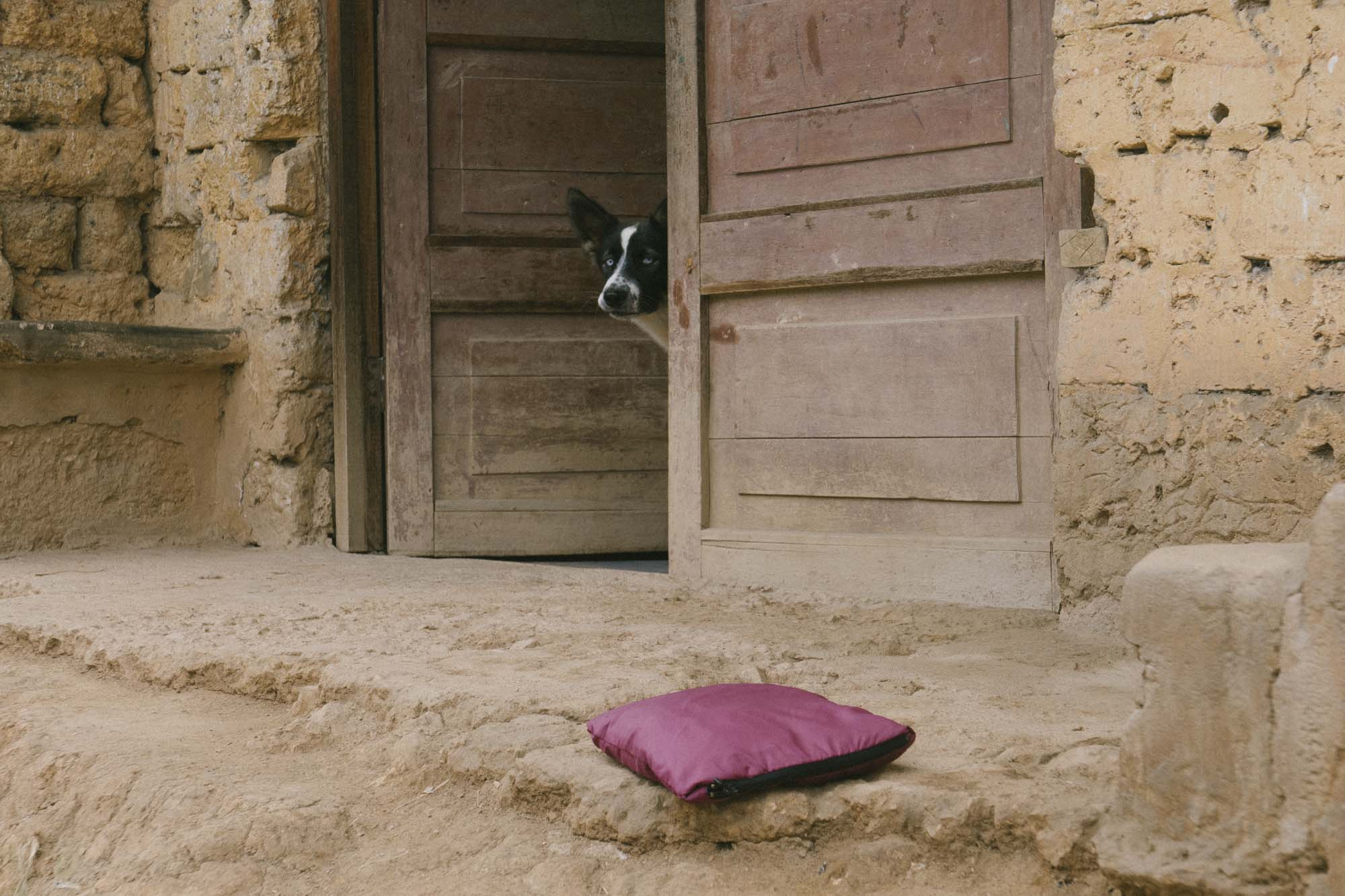 Marija Vidovic, Dogs 2.jpg