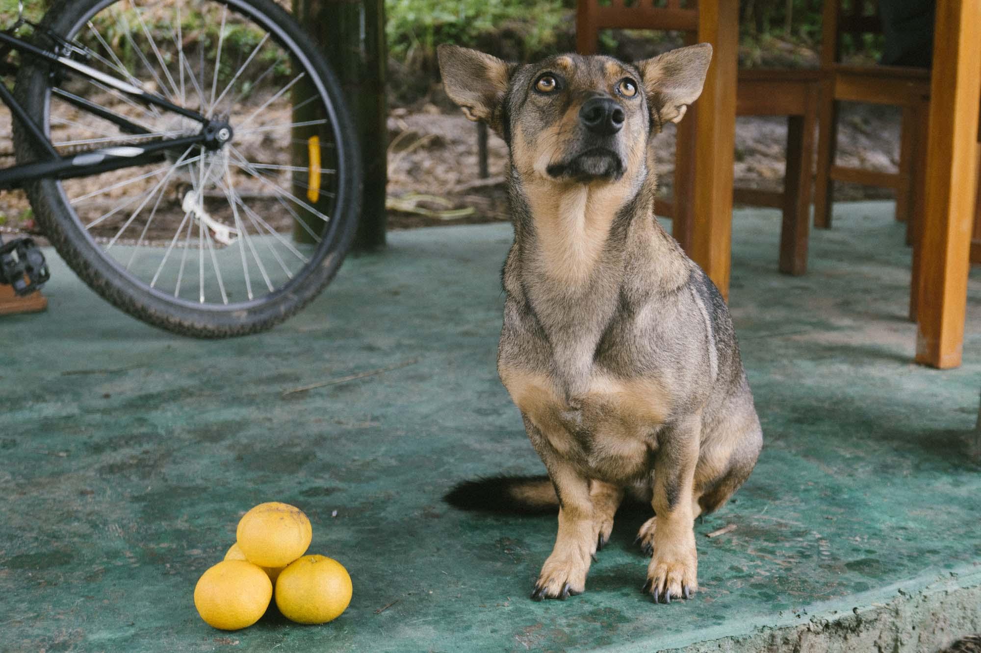 Marija Vidovic, Dogs 3.jpg