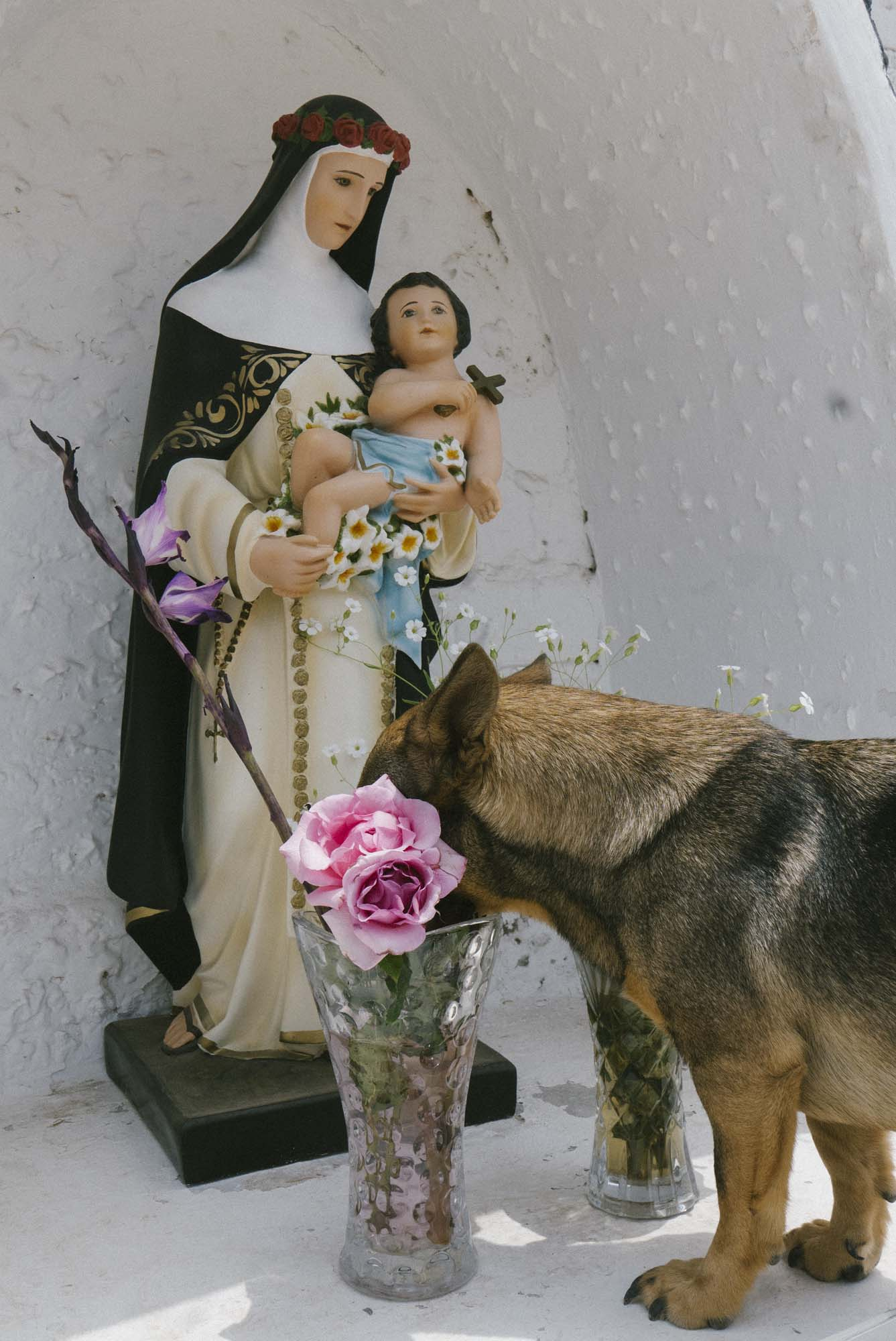 Marija Vidovic, Dogs 5.jpg