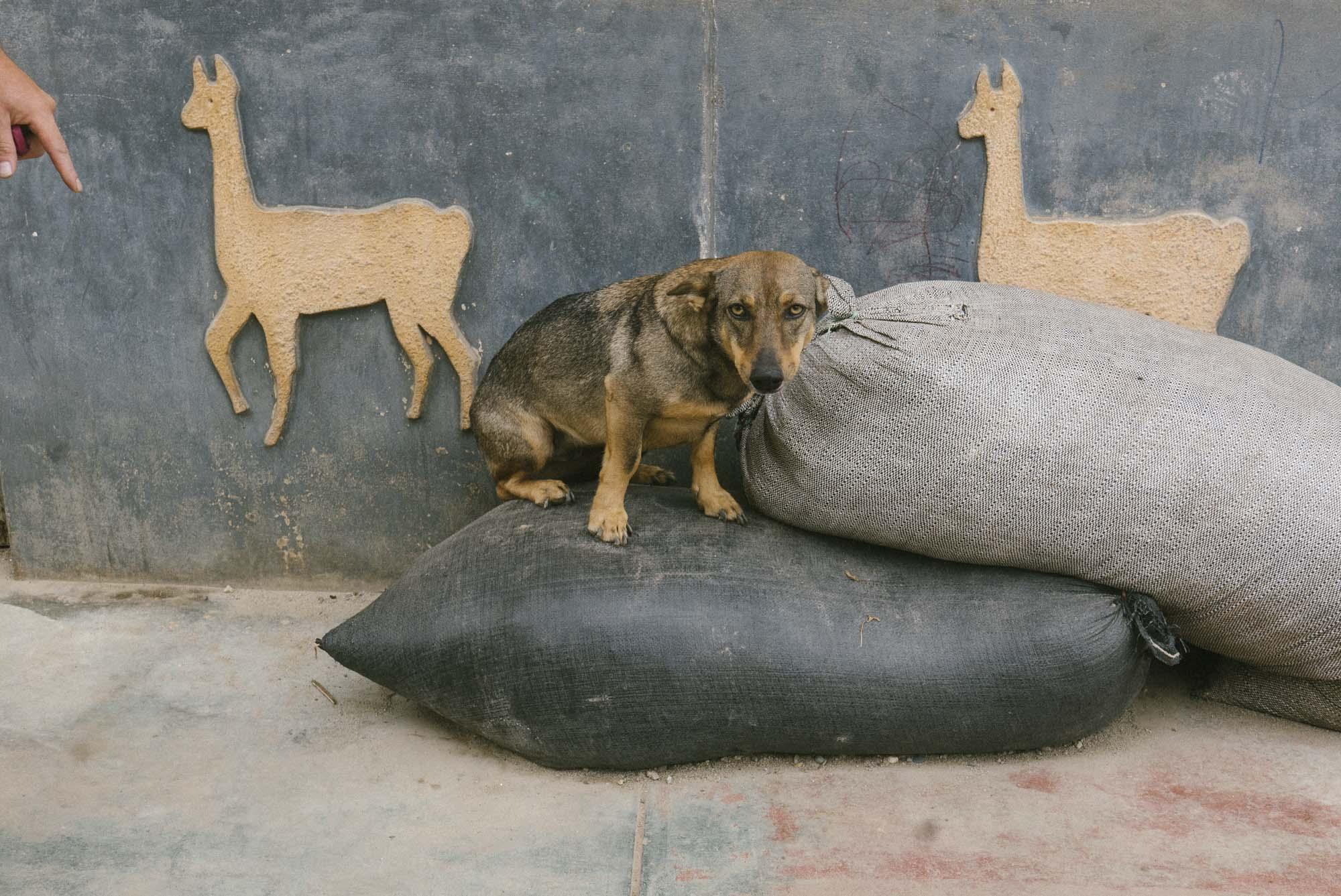 Marija Vidovic, Dogs 6.jpg