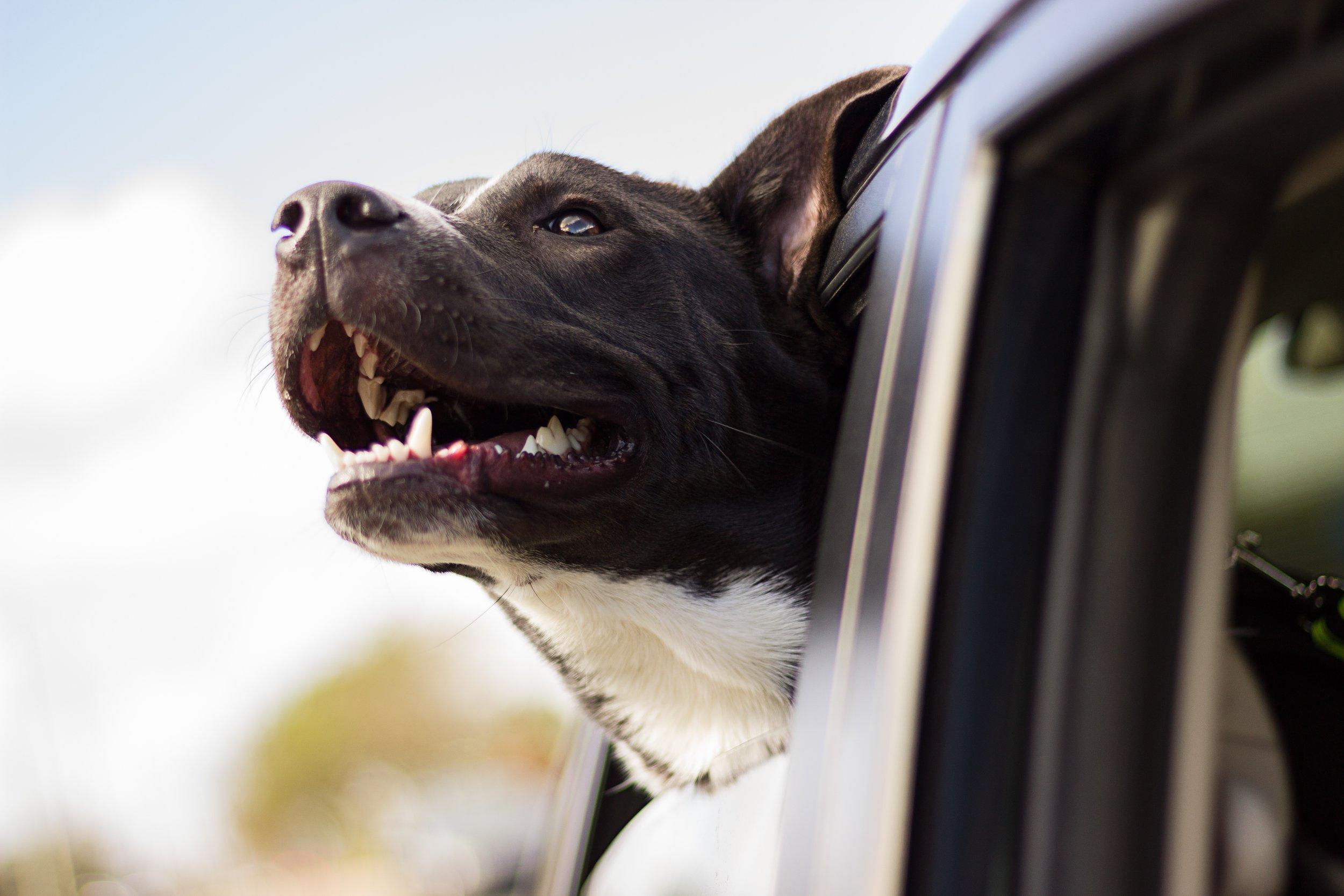 dog outside care .jpg