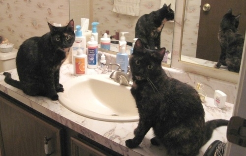 Cats don't believe it's naughty to knock things into the sink. They think it's like a carnival game.