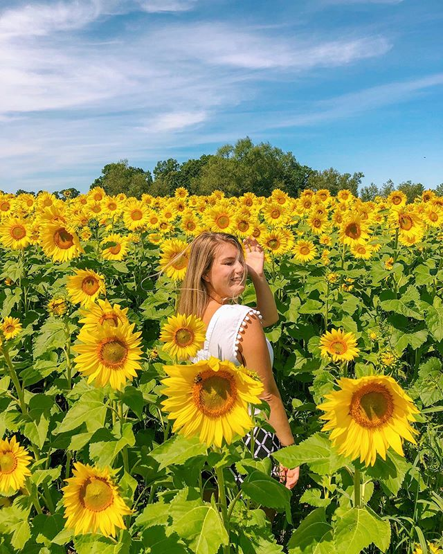 Hope everyone had a great Labor Day weekend 🌻 I had the best time exploring the sunflower fields at Colby Farm. I've wanted to see them for years, but they were always in bloom while I was away at college! Click the link in my bio to see even more beautiful pictures and read my blog post, it will be sure to brighten your day ☀️