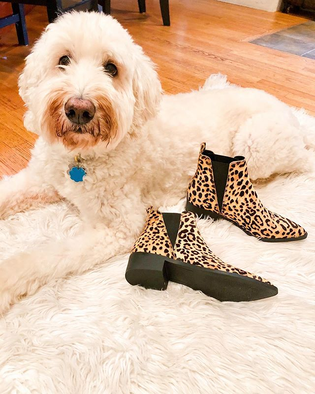 Winnie loves a good sale just as much as I do 💗 I've been looking for a pair of cheetah booties to add to my wardrobe for a while now. I finally found the perfect pair and even better - they are on sale! I can officially say that I own every article of clothing and basically accessories in cheetah now 😂 I can't get enough!
