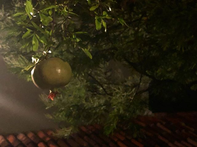 sleeping pomegranates, night ρόδια!