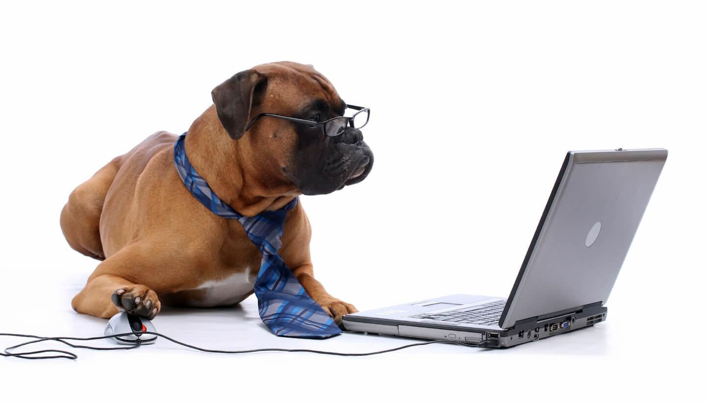Dog-at-Computer.jpg