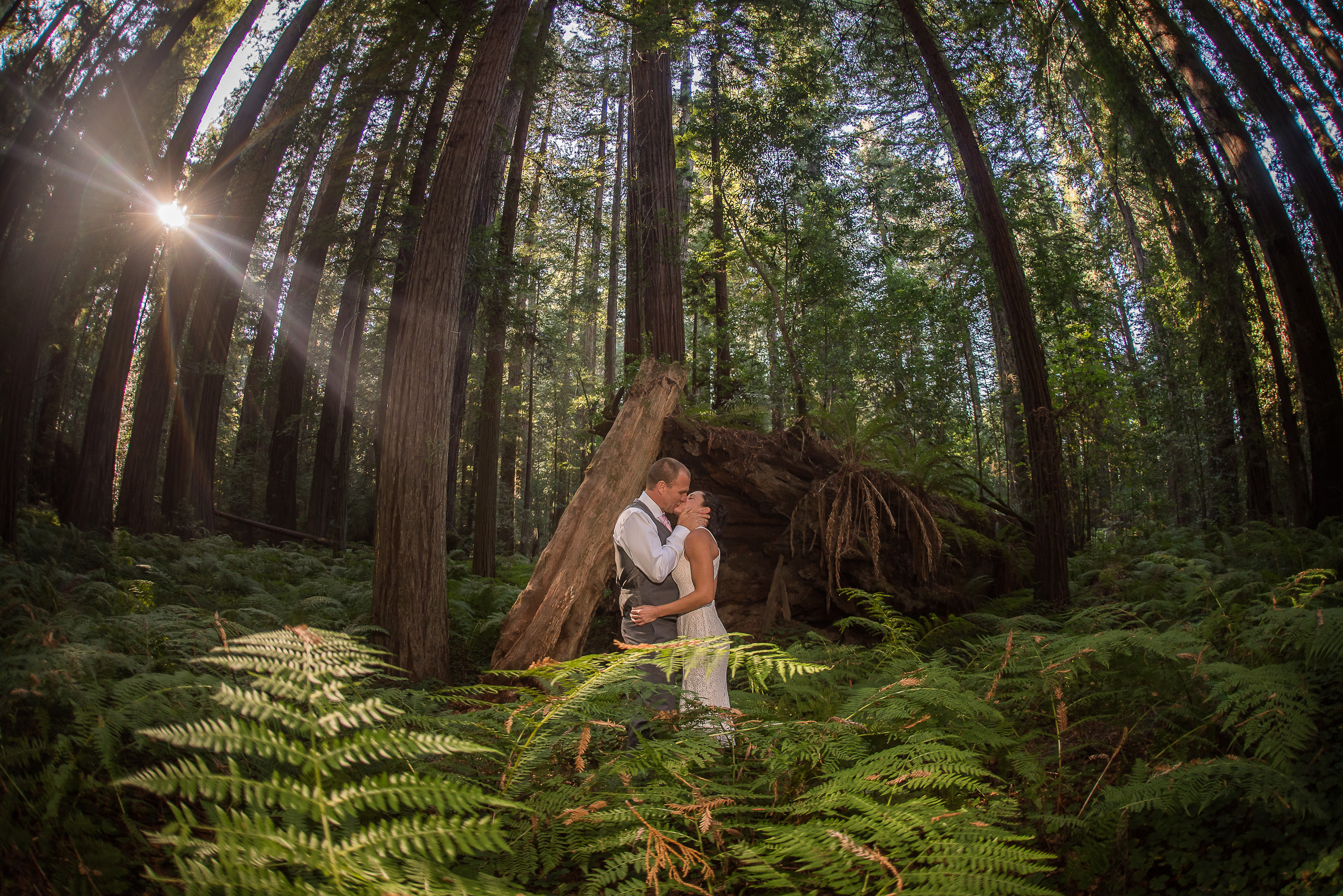 AVENUE OF THE GIANTS MAGICAL ELOPEMENT PARKYS PICS-19.JPG