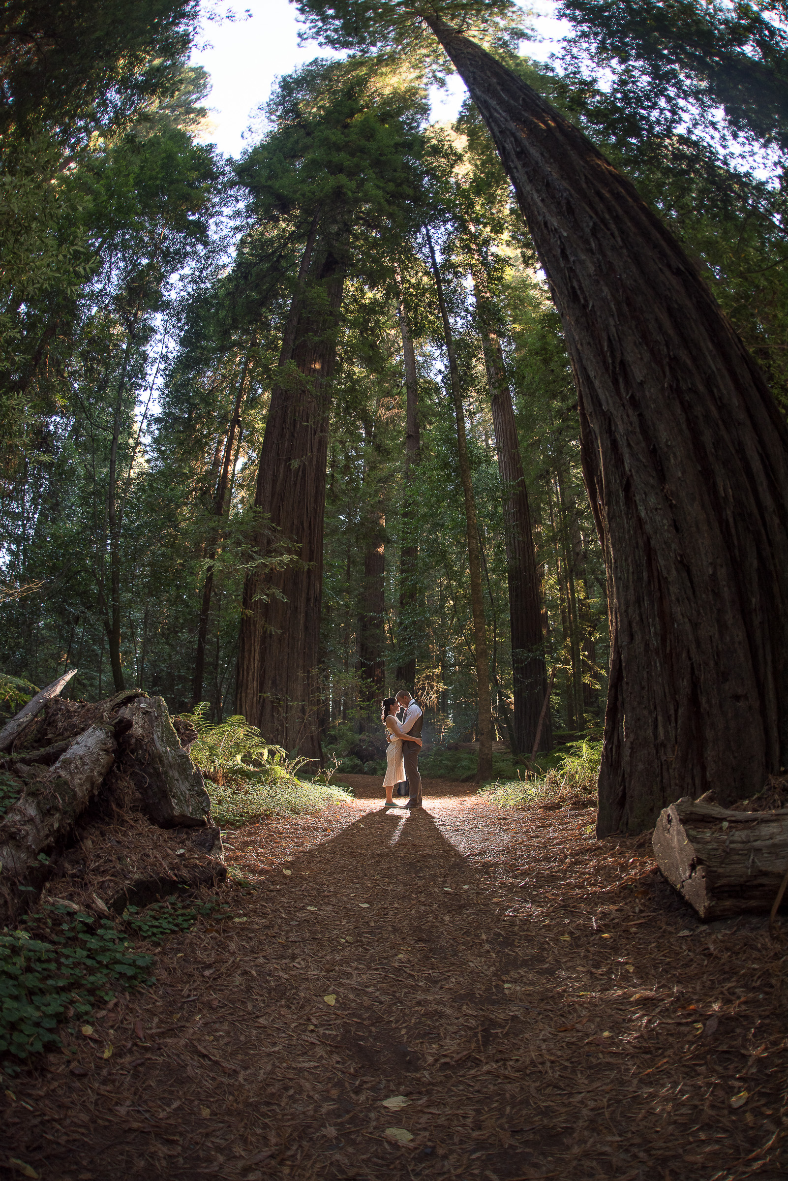AVENUE OF THE GIANTS MAGICAL ELOPEMENT PARKYS PICS-27.JPG