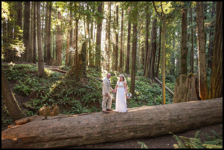 ParkysPicsHumboldtCountyElopementRedwoodsSequoiaPark_0240.jpg