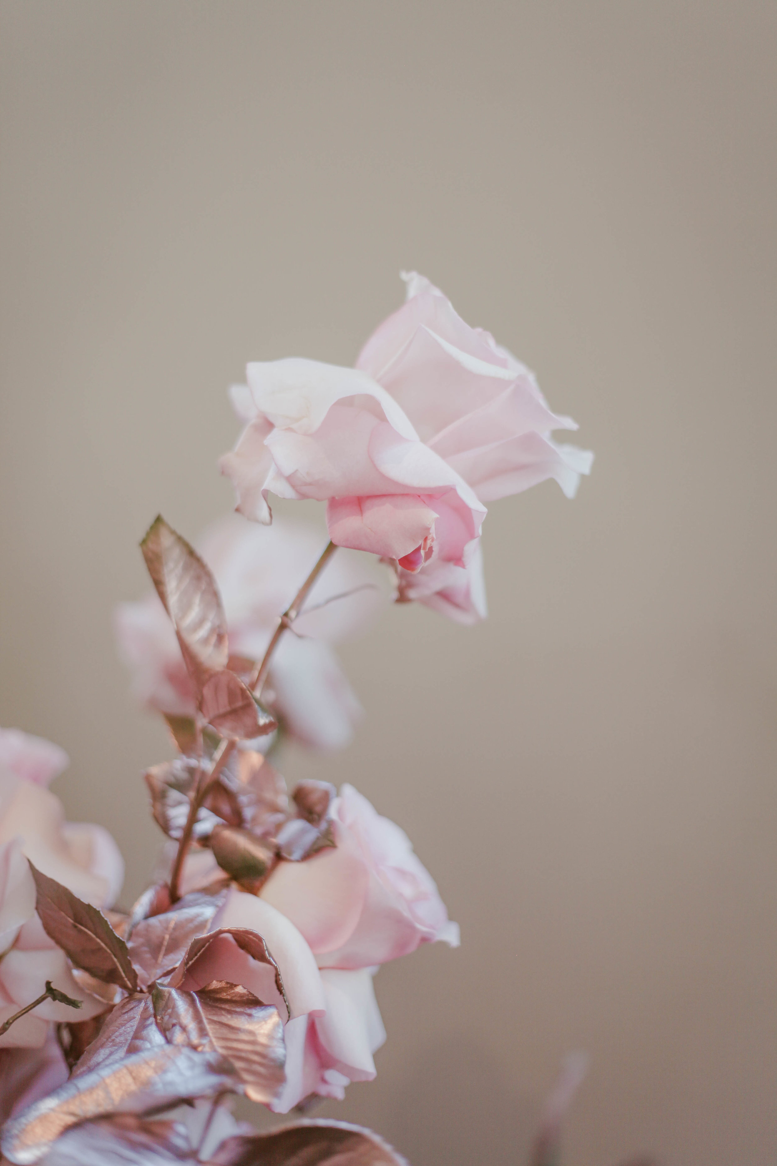 Steffanie's Bridal Shower-198.jpg