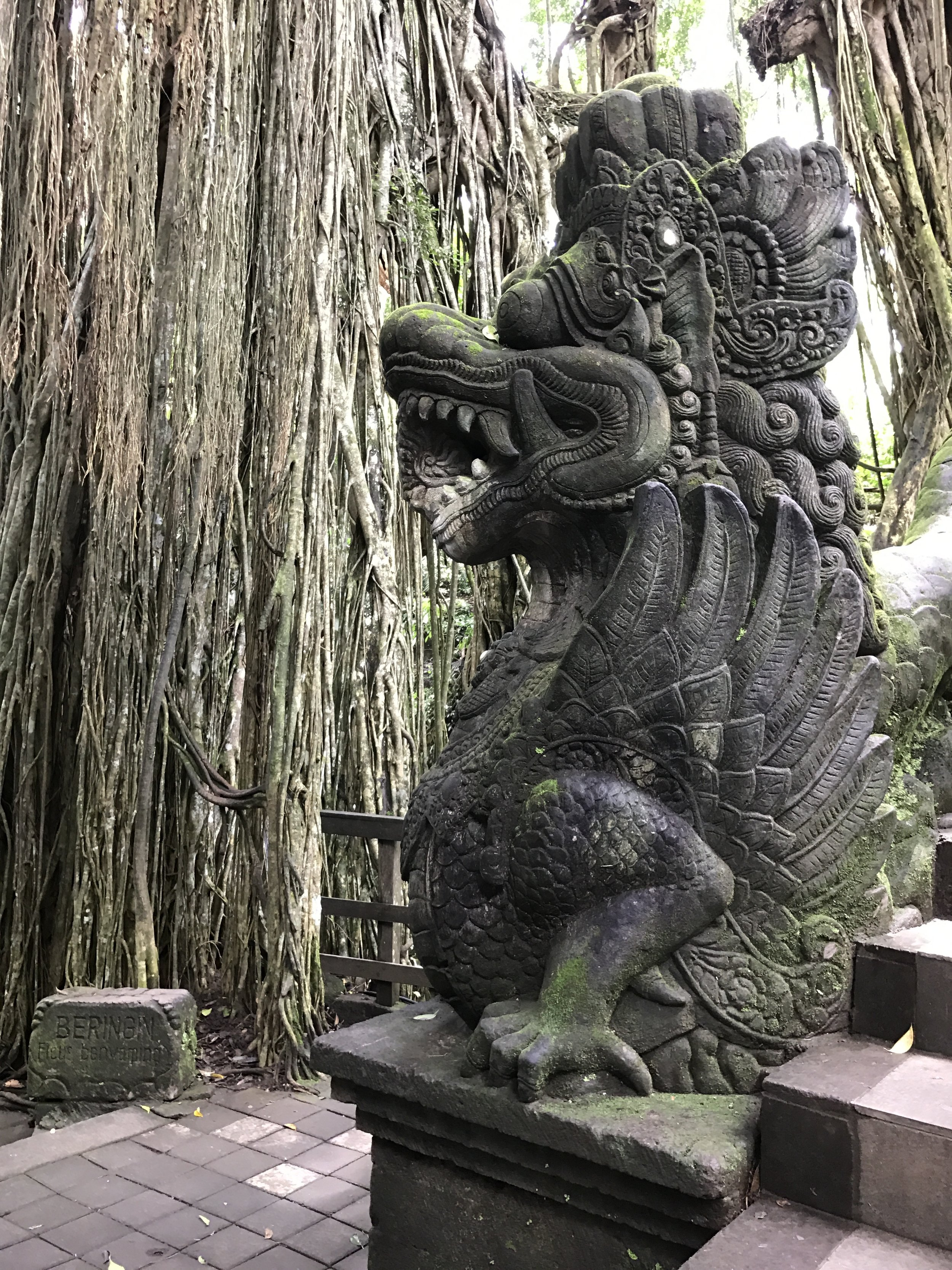 The dragon bridge at the Holy Spring Temple sits before a wall of banyan tree vines.