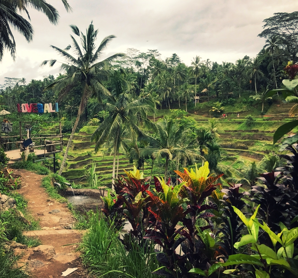 Love Bali Sign Tegallalang Rice Terrace Ubud Bali