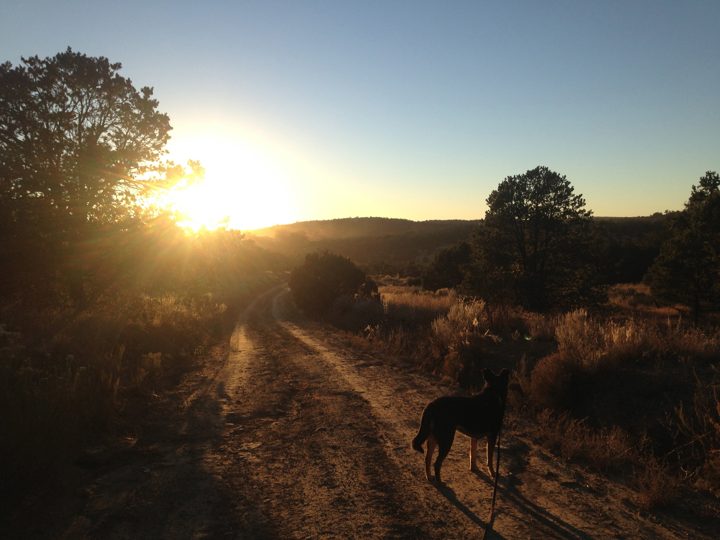 An evening hike in the neighborhood with our dog Ziggy.
