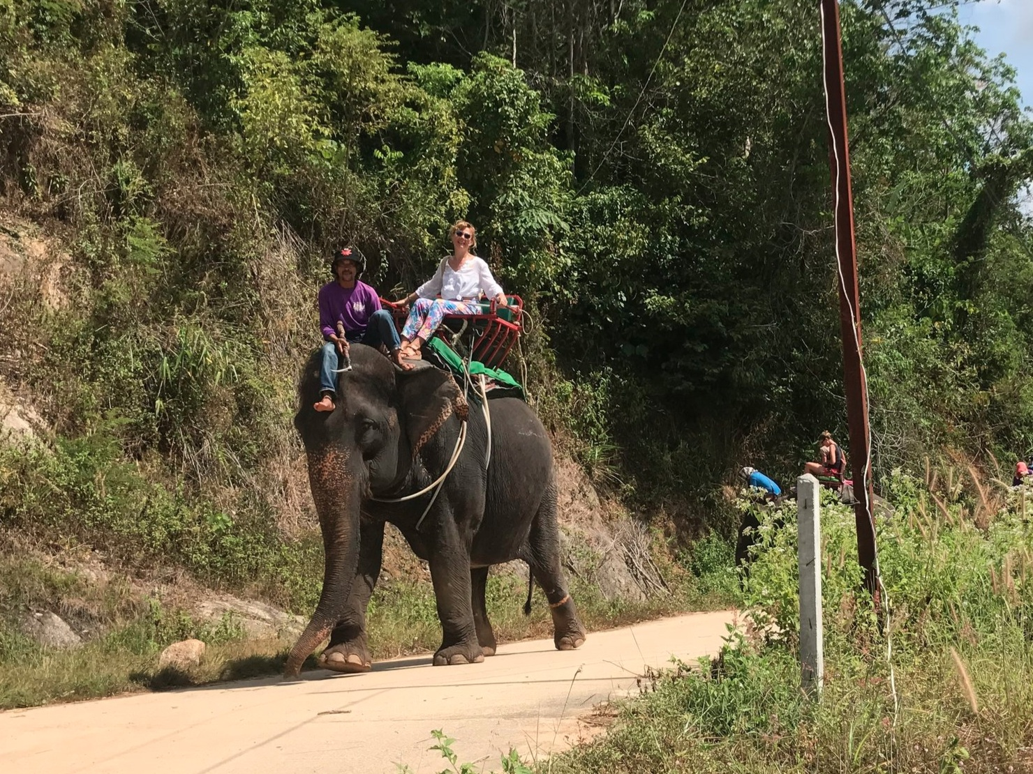 A tourist riding an elephant in Phuket, Thailand. Though elephants are considered domestic animals in the country, they must endure a brutal crushing of the spirit in order to serve man.
