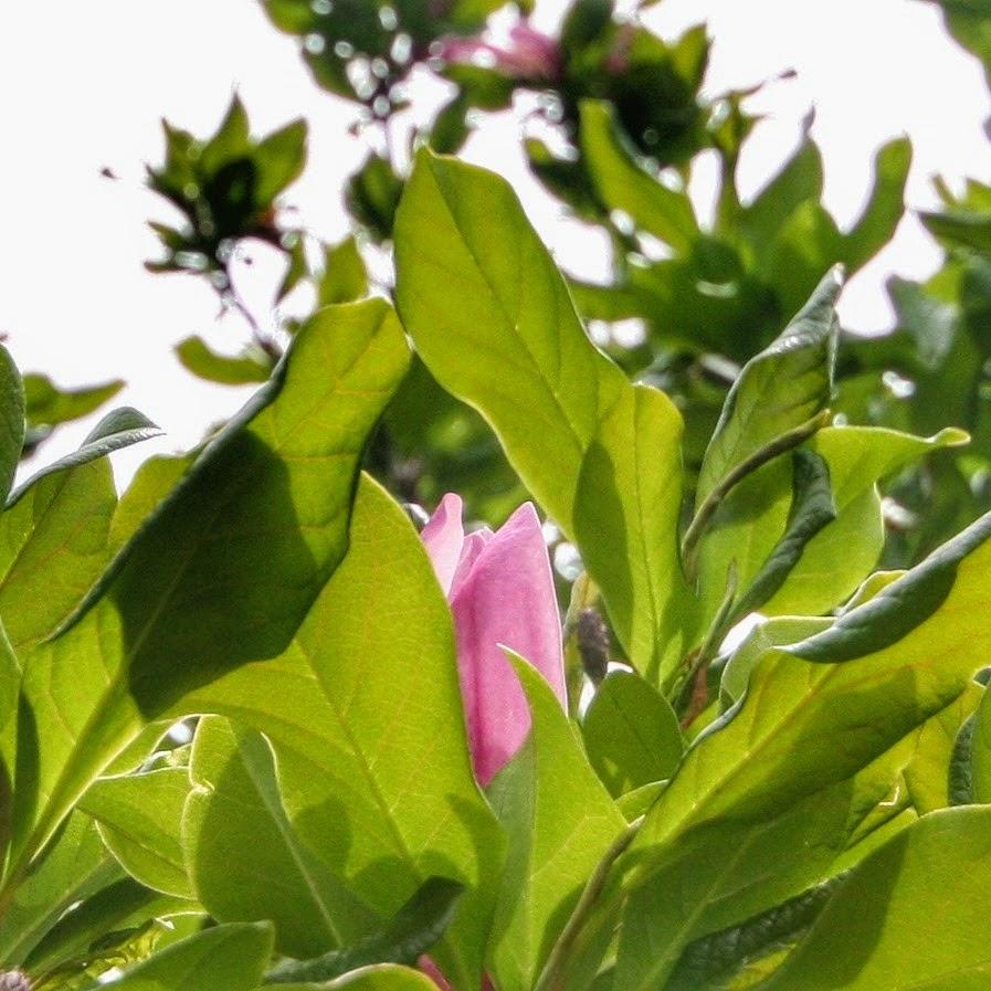 Pink flower Hidden beauty.jpg