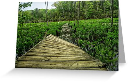 "Greeting card: "" Warped path through swampland"""