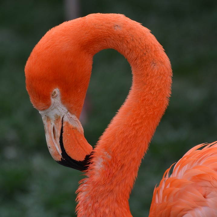 flamingo-1304218_960_720.jpg