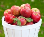 Honeycrisp_Apple_1_400-01.jpg