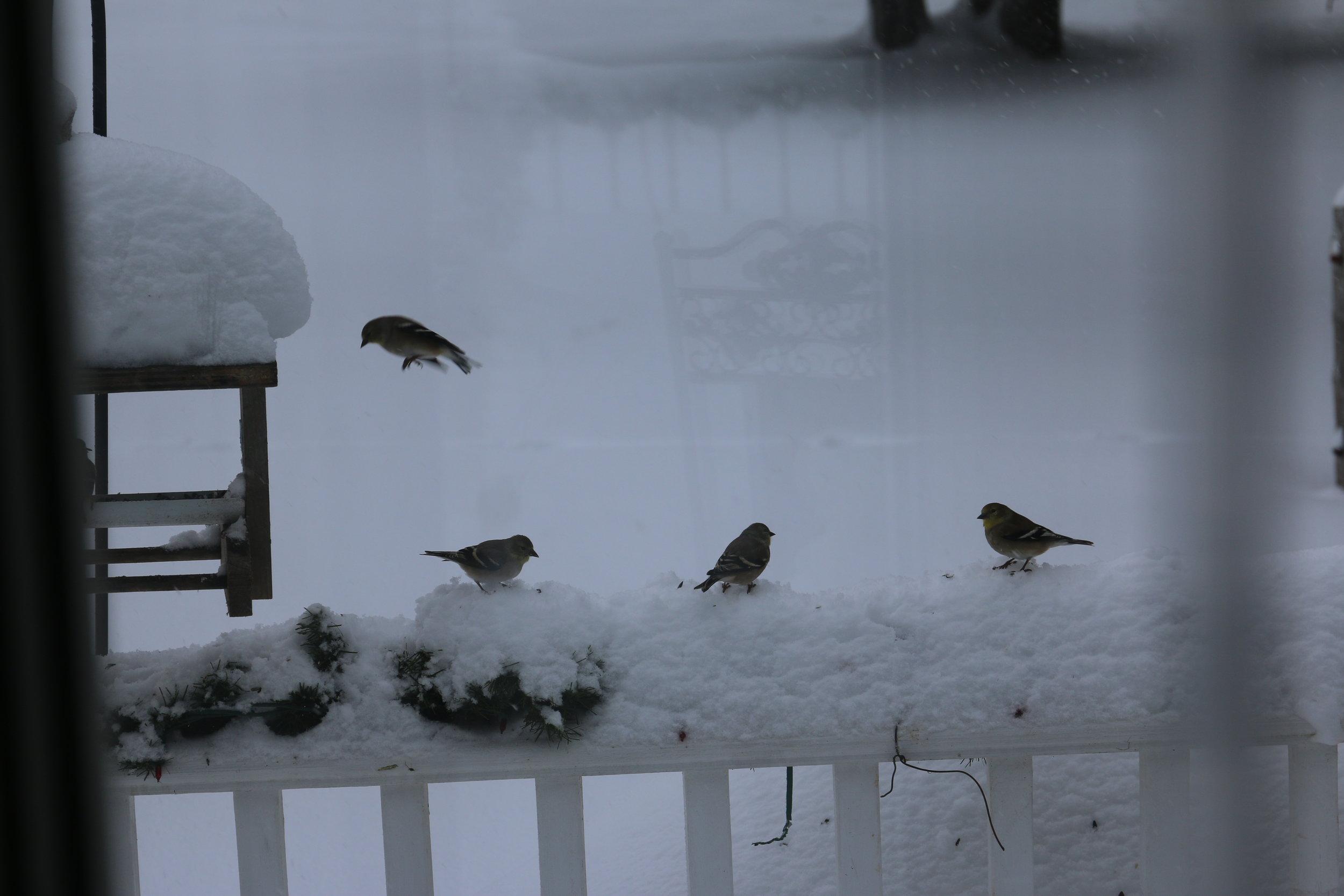 Birdies!
