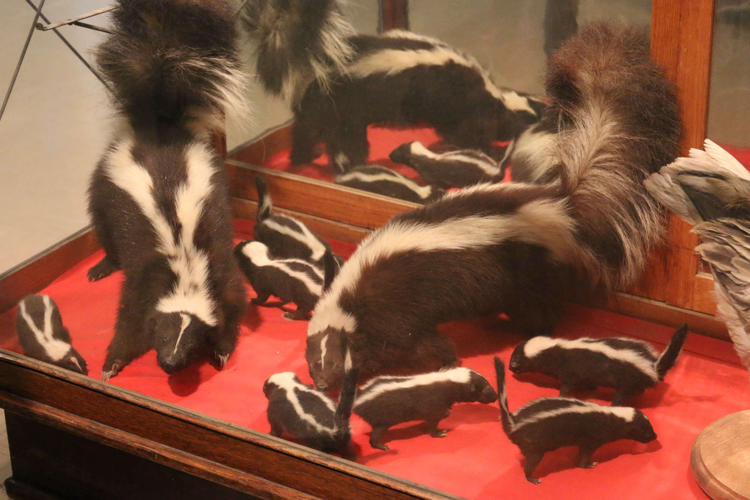and I got to cross seeing a family of skunks off of my bucket-list....oh wait, that was never on it ;)